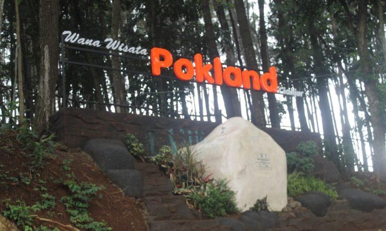 Pokland, Tempat Wisata Hutan Pinus Kekinian di Cianjur