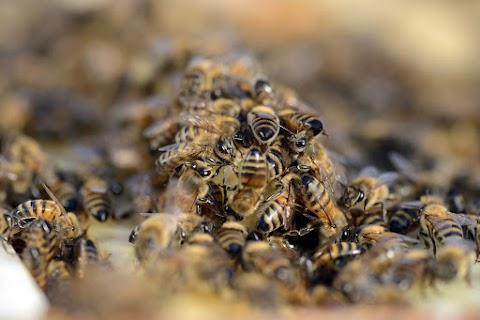 Kamu Geriék méheket akarnak telepíteni a buszmegállókhoz a VIII. kerületben