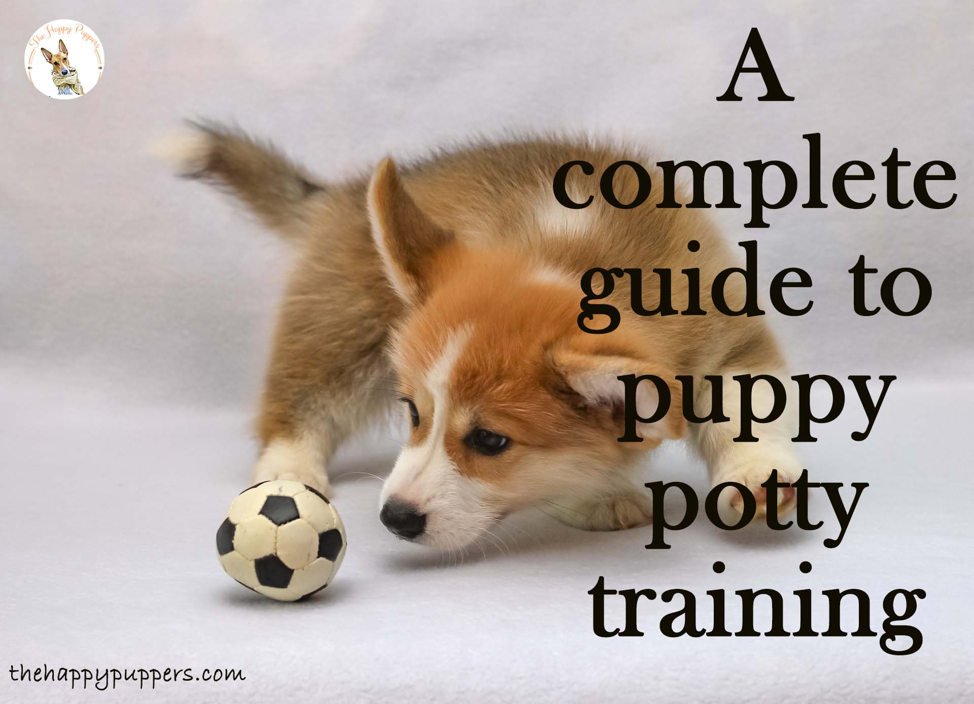 A complete guide to puppy potty training