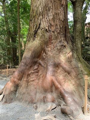 パワースポットの杉