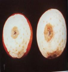 Gambar Buah apel yang mengalami kekurangan kalsium