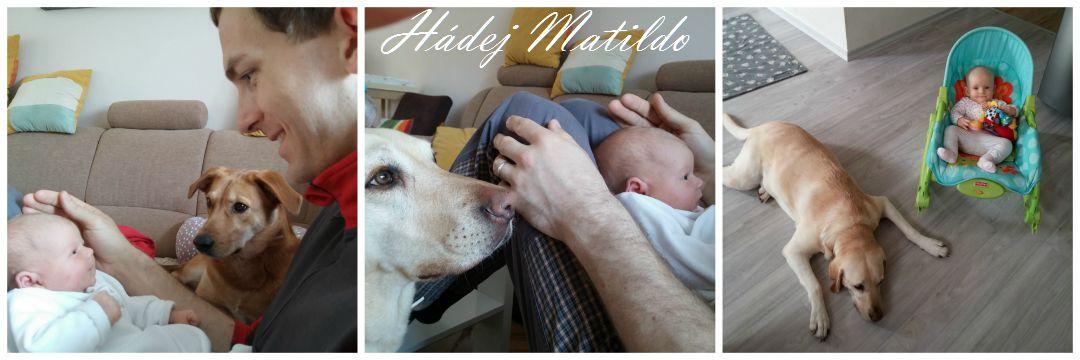 pes a dítě, adopce psa, pes z útulku