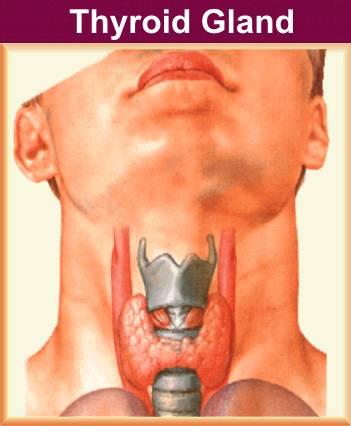 Hepatitis C- Thyroid dysfunction