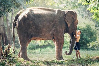 Jika berbicara tentang makhluk terbesar yang ada di muka bumi ini Contoh Report Text about Elephant dan Arti Terjemahannya