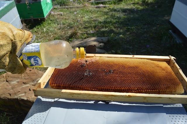 Πατέντα ταϊσμάτος μελισσιών με κορυφαία αποτελέσματα και χωρίς κόστος. Ιδανικό για τα μικρότερα μας μελίσσια!!!