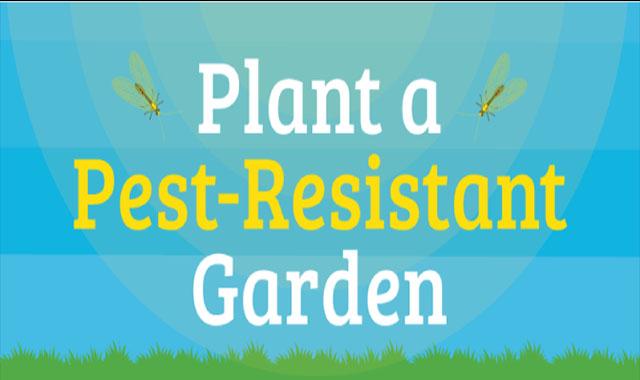 Plant a Pest-Resistant Garden