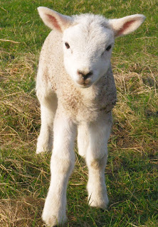 There's more to fishing than catching fish - a newborn lamb.