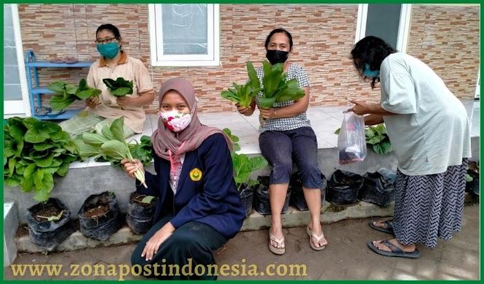 Mahasiswa KKN BTV 3 Unej Naikkan Eksistensi Pertanian Organik Di Kelurahan Wates Kota Mojokerto