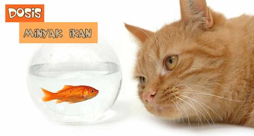 Minyak Ikan Kucing Persia