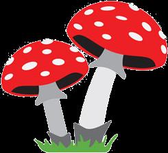 Mushroom farming training in Satara