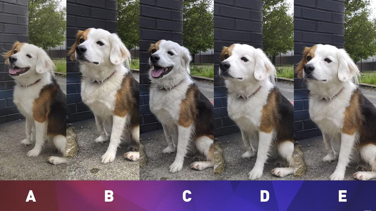 Сравнение камер iPhone X, Huawei P20 Pro, OnePlus 6, Google Pixel 2 XL и Samsung Galaxy S9+ при съемке животных