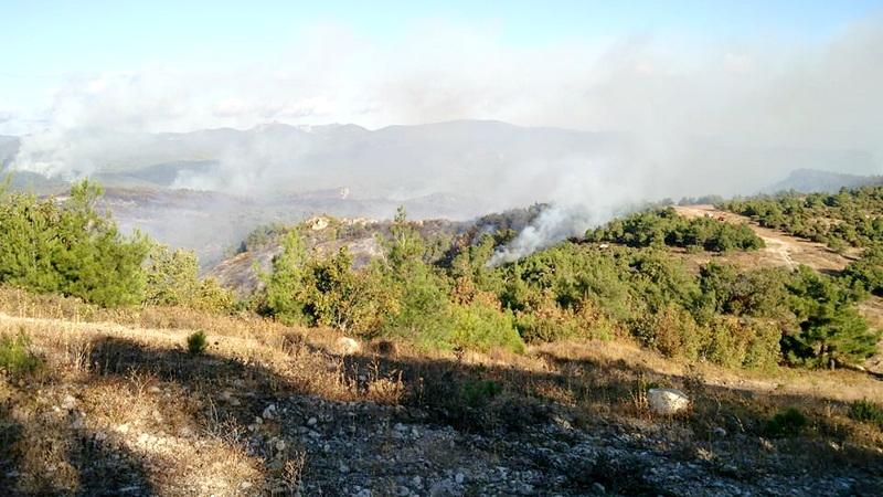 Η επόμενη μέρα μετά την πυρκαγιά στο Εθνικό Πάρκο Δάσους Δαδιάς - Λευκίμης - Σουφλίου