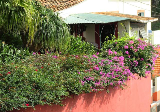 """flowers numa """"Quinta madeirense"""""""