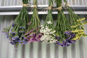 Secado de espigas y flores