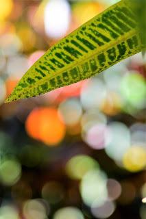 plant bokeh photo
