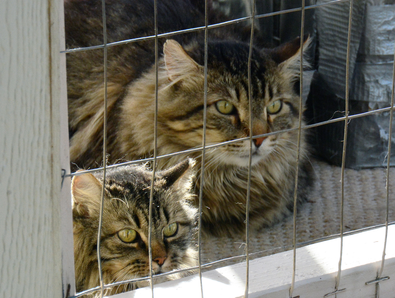 Homeless cat care for Having an indoor cat