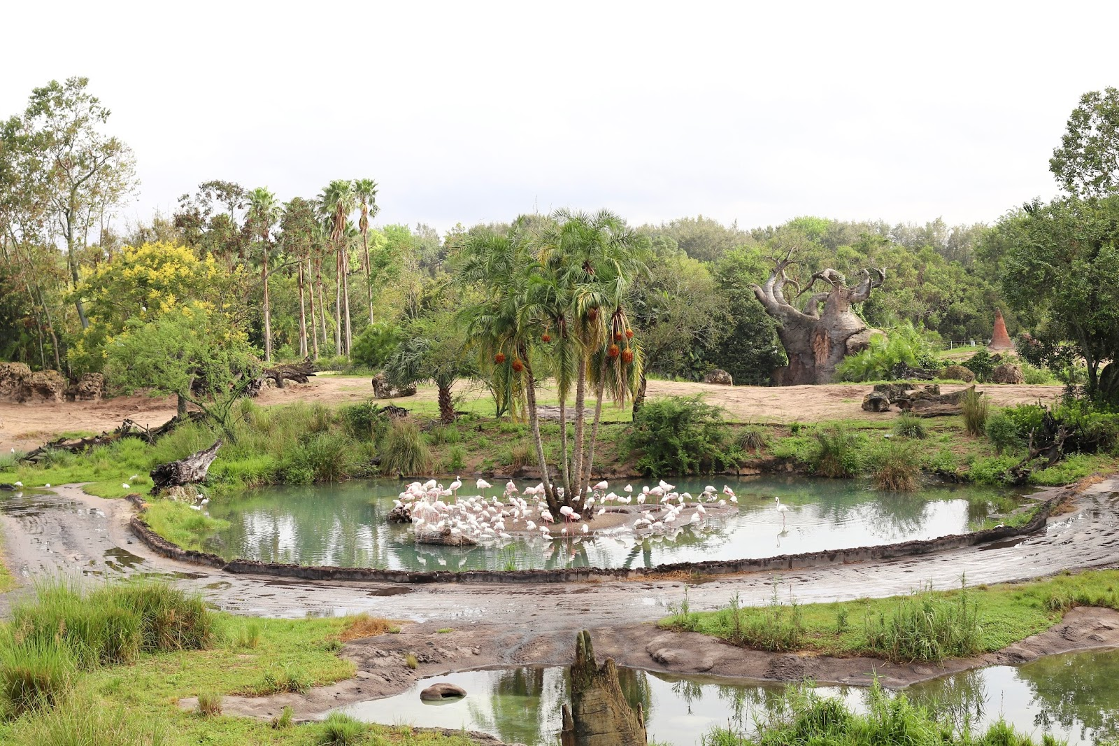 Animal Kingdom Wild Africa Trek Safari view