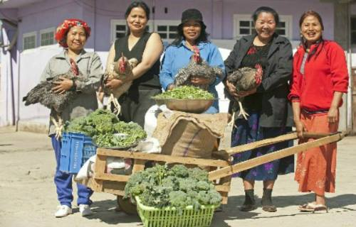 Những người vợ chuẩn bị bữa ăn cho cả nhà