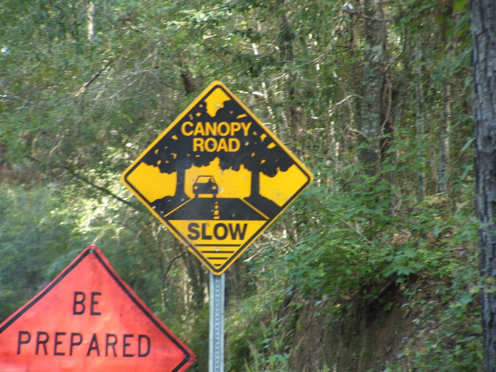 CANOPY ROADS u0026 COUNTRY LANES u2013 The Canopy Road Automobile Tours & Rediscovering Florida: CANOPY ROADS u0026 COUNTRY LANES u2013 The Canopy ...