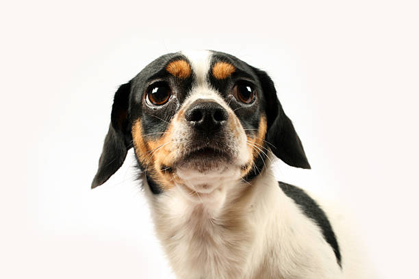 Fear in Puppies – How to Deal with It