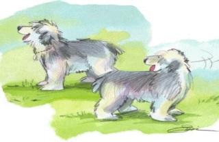 El viajero y su perro