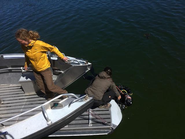 Kaksi ihmistä veneessä auttavat vedessä olevaa sukeltajaa.