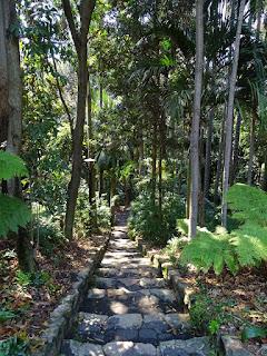 Brisbane Regenwald in den City Botanic Gardens