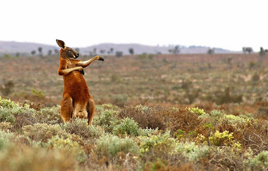 14 Entries To The 2017 Comedy Wildlife Photography Awards That Will Make You Laugh Your Heart Out - Kung Fu Training - Australian Style, Flowers Gap, Australia By Andrey Giljov