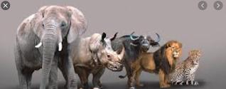 Cinco especies africanas en peligro