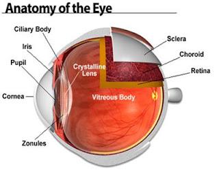 organus visual(penglihat)