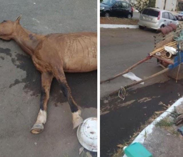 Anápolis: Égua morre quando puxava carroça com excesso de peso