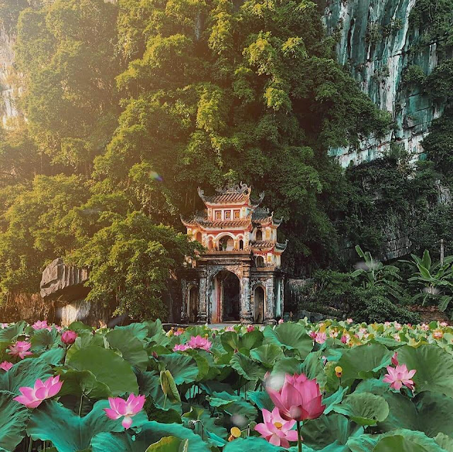 Tưởng như lạ nhưng lại rất quen, đầm sen mới nổi ở Ninh Bình nằm ngay dưới chân núi Ngọa Long của Hang Múa. Hồ được trồng sen từ năm nay, một bên là núi Ngọa Long với đỉnh núi Múa còn một bên là cánh đồng lúa chín vàng.