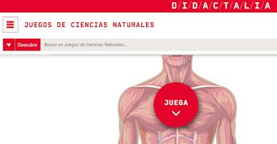 https://cienciasnaturales.didactalia.net/recurso/musculos-del-cuerpo-vista-de-frente-primaria/eee04200-1422-4631-b087-31690bbb650b