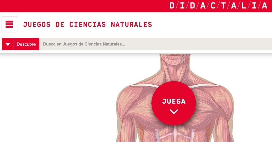 JUEGO DEL CUERPO HUMANO: Músculos y Huesos - REFUERZO VIRTUAL