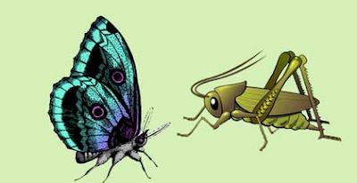 Belalang kupu-kupu