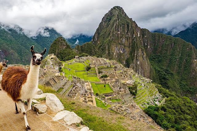 Llama en Machu Picchu