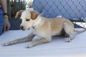 Adopt а Pet Humane Society