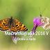 Macro 2016 V