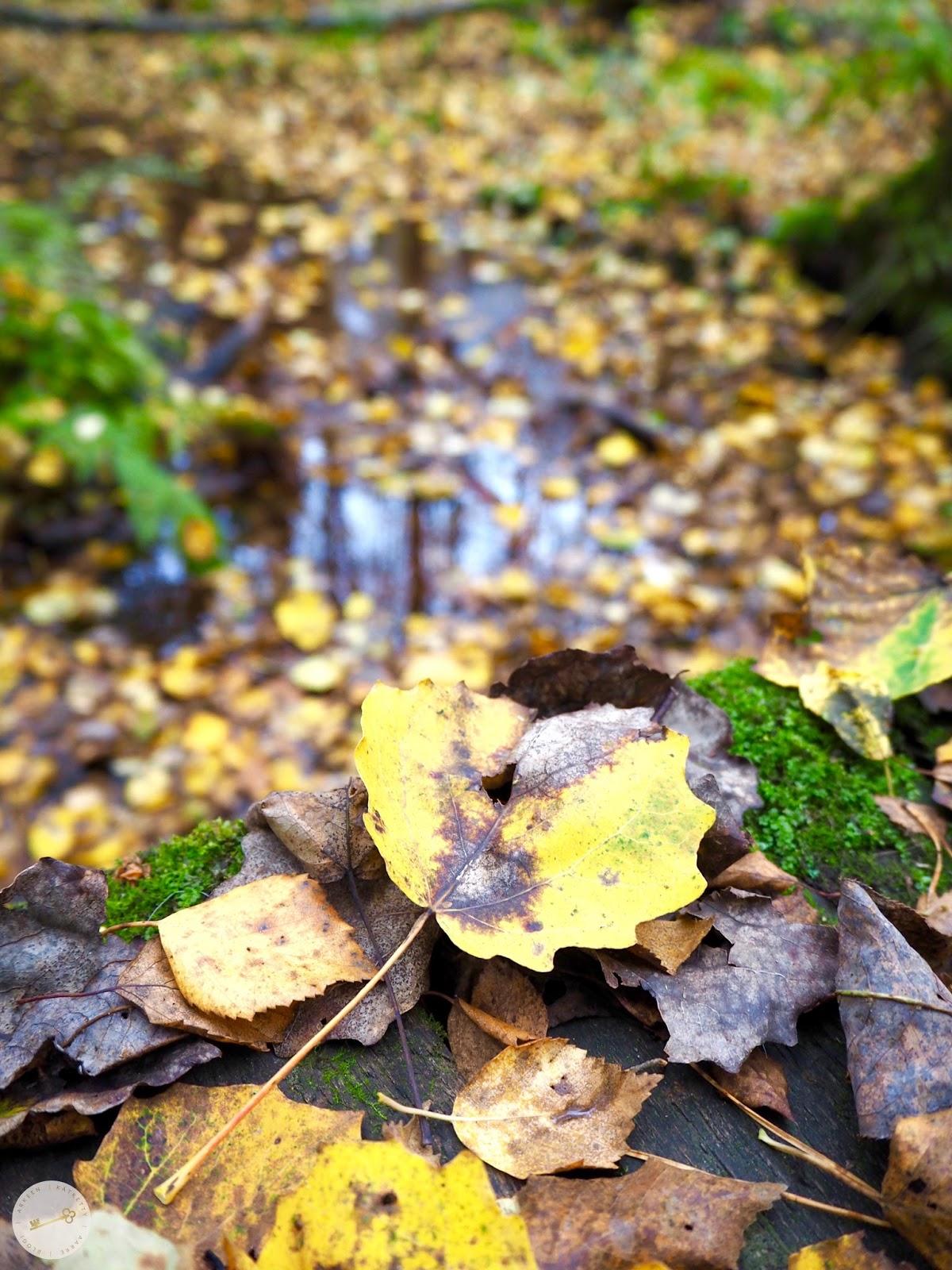 Kauniita ruskan lehtiä pienen puron varrella Pomponrahkalla Turussa.