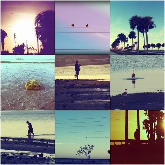 Photographs taken of beach living on the Dunedin Causeway in Dunedin, Florida