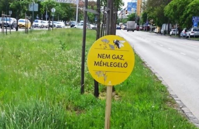 Méhlegelőbotrány: hírzárlatot rendeltek el a méhészeknél?