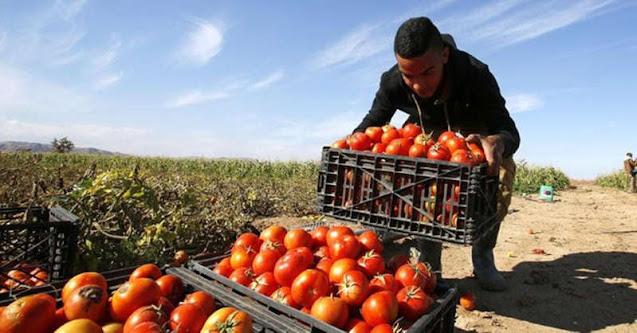 Il paradosso sullo scaffale: costa di più la bottiglia della passata di pomodoro