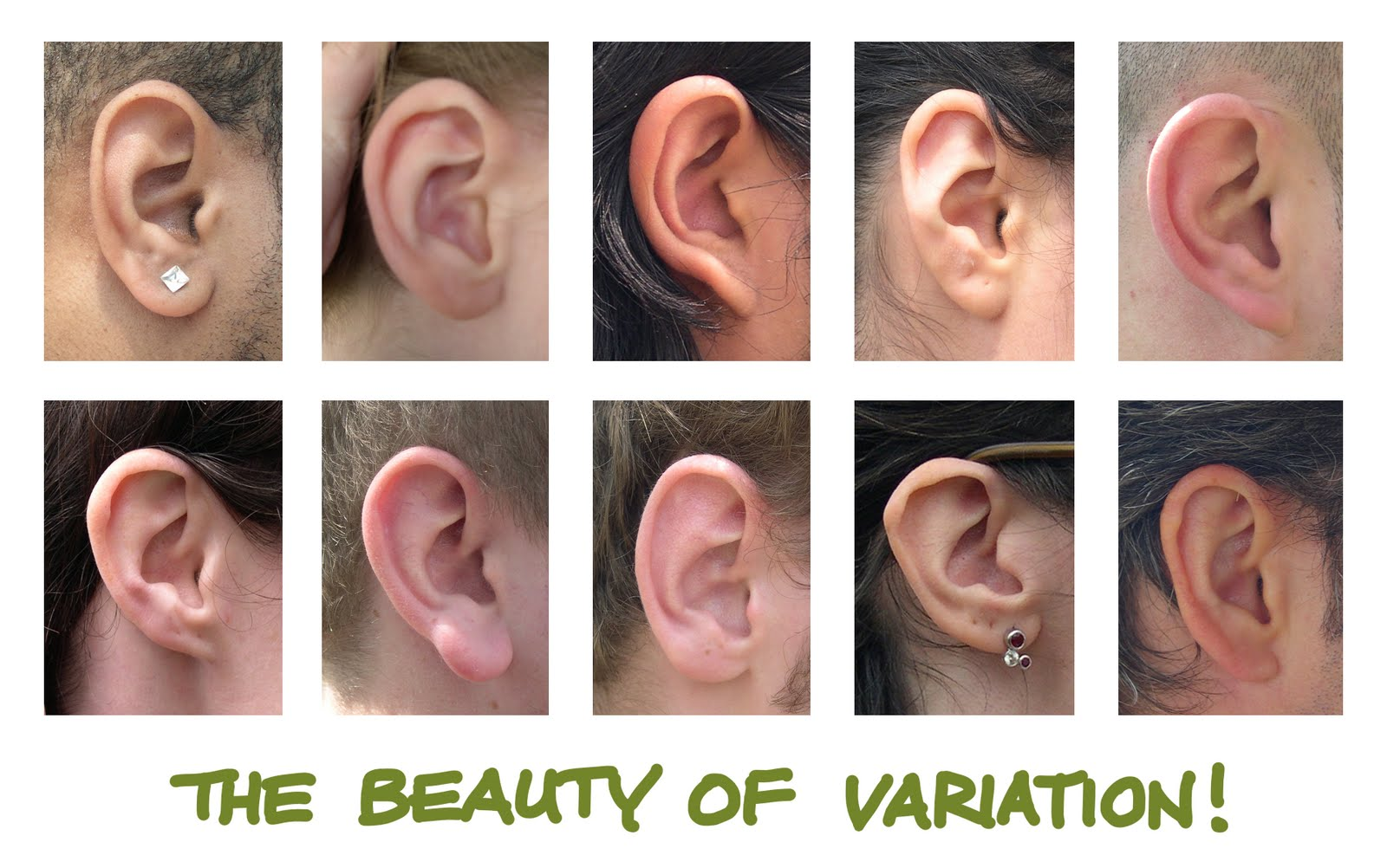 Human Anatomy For The Artist The External Ear Shhh I M