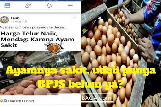 Soal Harga Telur Melonjak Karena Ayam Sakit, Wanita ini ...