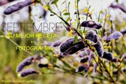 http://www.maraengredos.com/p/blog-page_6.html