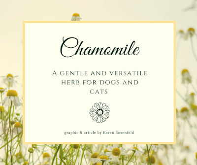 Chamomile for Dogs and Cats