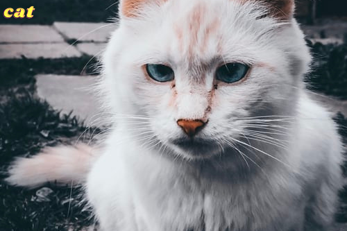 Get Your Furry Felines Active With Pet Accessories