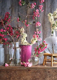 easy spring decoration with pink blooming branches