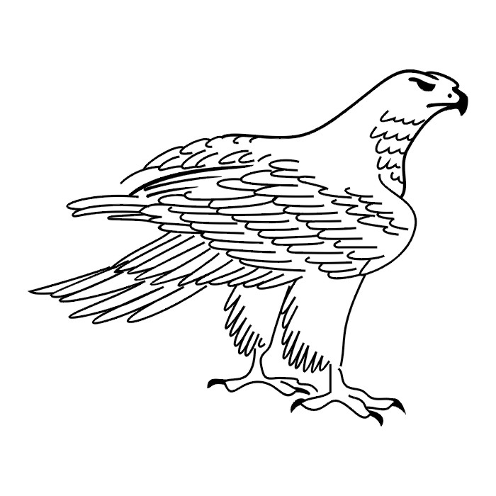 Tatto Black N White Bird