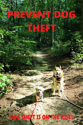 Prevent Dog Theft, Pet Theft, Dognappers,